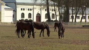 54 klacze i jeden ogier. Jest lista koni na Pride of Poland