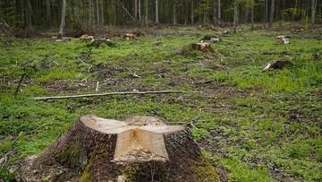 """Premier o nakazie UNESCO dot. zaprzestania wycinki w Puszczy Białowieskiej. """"Nie ma takiej decyzji"""""""