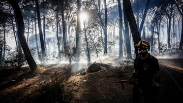Pożary w Czarnogórze. Ewakuowano turystów