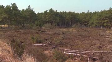 Jest akt oskarżenia przeciwko dwóm osobom, które zleciły wycinkę lasu w Łebie