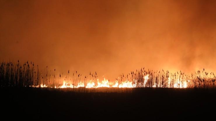 """Dobre wiadomości z Biebrzańskiego Parku Narodowego. """"Obszar objęty pożarem nie powiększa się"""""""