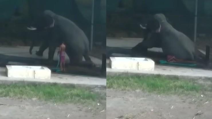Mył słonia i poślizgnął się, a zwierzę na nim usiadło. Zginął na miejscu