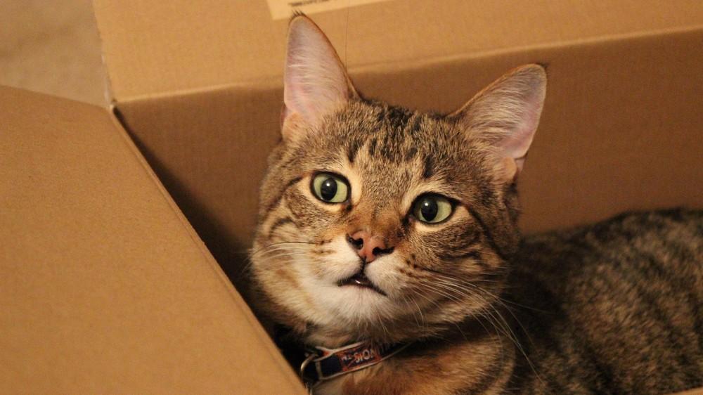 Wiemy, dlaczego koty uwielbiają siedzieć w pudełkach, nawet tych… iluzorycznych