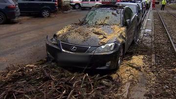 Powalone drzewo w centrum Warszawy. Zniszczyło dwa auta