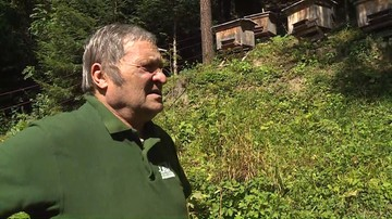 Niedźwiedzie w Bieszczadach niszczyły pasieki. Jest zgoda na odstraszanie