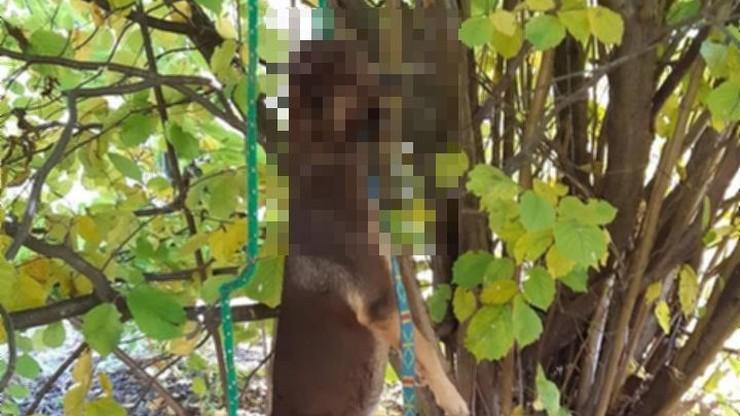 Policja w Gdańsku szuka sprawcy powieszenia psa