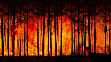 Tysiące strażaków walczy z pożarami lasów na Syberii