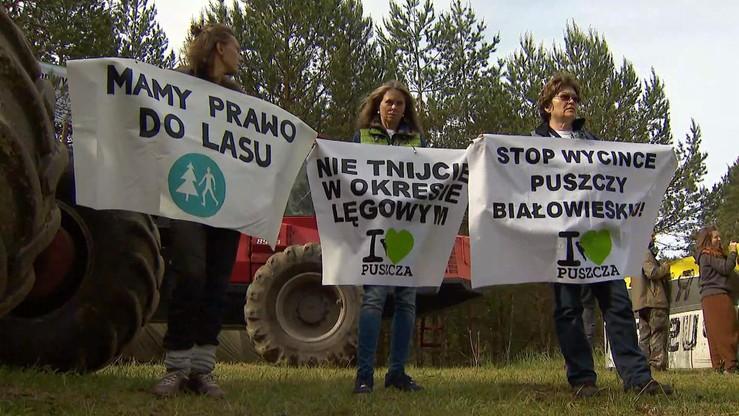 W czwartek resort środowiska ma odpowiedzieć w sprawie unijnych kar za niewstrzymanie wycinki Puszczy Białowieskiej