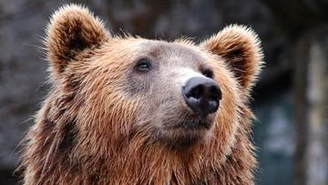Starsze małżeństwo znalazło w kuchni... niedźwiedzia. Przepędziło go kijem bejsbolowym