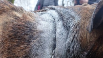 Sprawca bestialskiego pobicia psa zatrzymany. To konkubent właścicielki