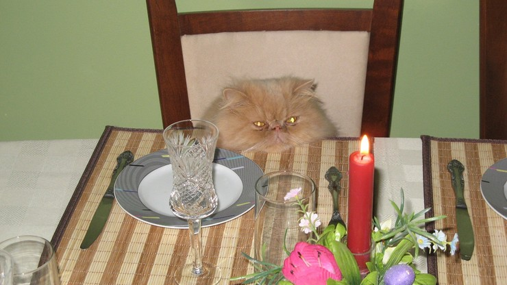 15 osób zakażonych koronawirusem po urodzinach kota