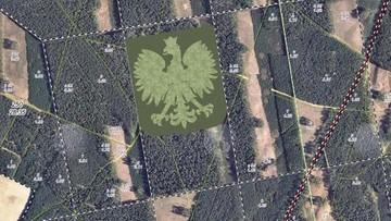 Orzeł z drzew może trafić do księgi rekordów Guinessa