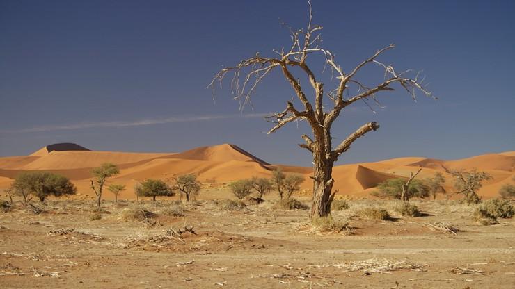 34 migrantów zmarło na pustyni z wyczerpania. Wstrząsające odkrycie w Nigrze