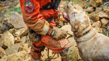"""""""Nigdy nie zostawił żywej osoby w przeszukiwanym rejonie"""". Labrador Diego nie żyje"""