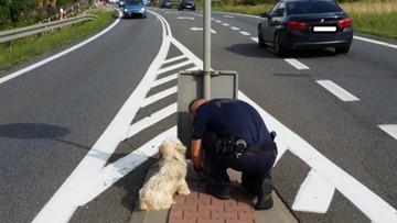 Przywiązany łańcuchem do słupka. Porzuconego na drodze krajowej psa uratowali policjanci
