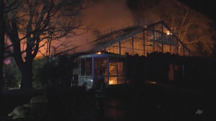 Pożar w niemieckim zoo. W sylwestrową noc spłonęło trzydzieści małp