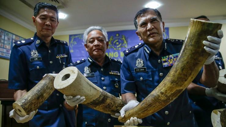 Rejsowym samolotem próbowali przemycić 160 kg kości słoniowej