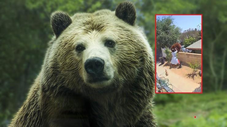 Nastolatka rzuciła się na niedźwiedzia. Chroniła psy
