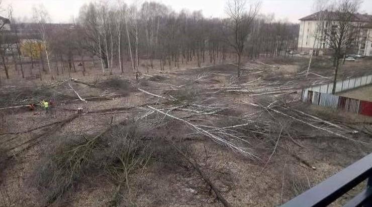 Wycinka drzew w Markach