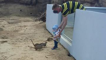"""Włożył dziecko do wybiegu dla zwierząt w zoo w Zamościu. Ogród publikuje zdjęcie """"myślącego inaczej"""""""
