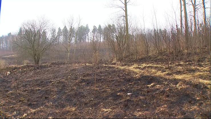Wypalanie traw. Ogromny pożar pod Olsztynem. Spłonęło 20 hektarów
