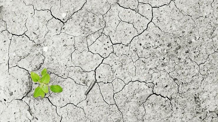 Zajęcia w szkole na temat klimatu? RPO napisał do ministra edukacji