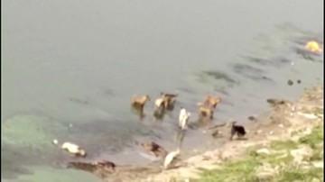 Ciała dryfujące w Gangesie. Mogli umrzeć na COVID-19