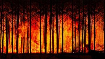 Od początku roku niemal 1,5 tys. pożarów lasów i 25 tys. pożarów traw