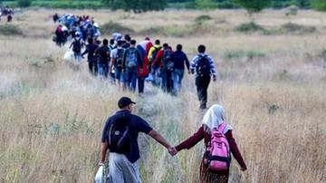 OECD: szczyt kryzysu uchodźczego minął