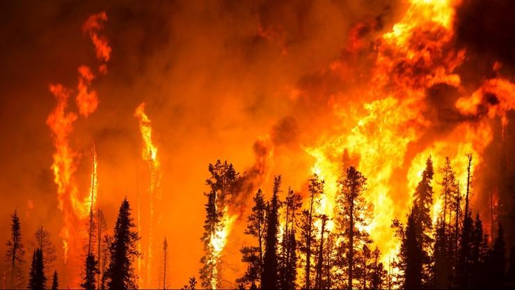Pożary lasów w Kanadzie. 37 tys. osób zmuszonych do ucieczki