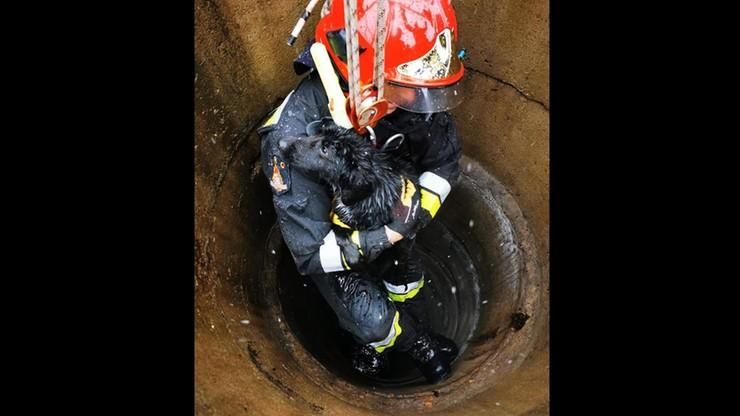 Pies w objęciach strażaka. Spadł 8 metrów pod ziemię