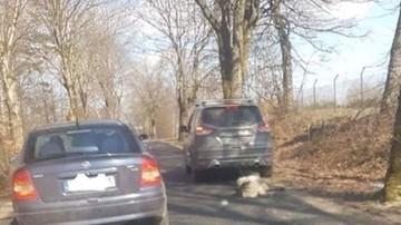 Wlókł psa za samochodem. Akt oskarżenia ws. byłego senatora PiS