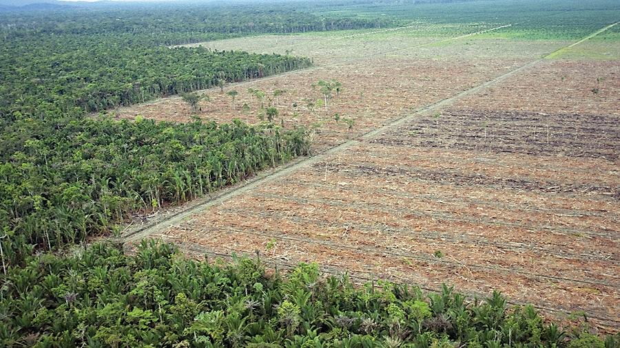 Wycięte lasy Amazonii. Fot. Twitter.