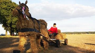 Raport: bez zmian  polskie rolnictwo nie będzie konkurencyjne w Unii