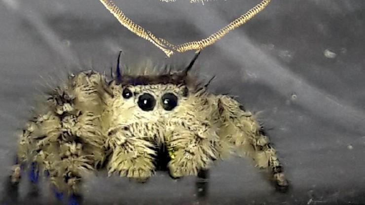 Kupił auto w USA, przypłynęło do Polski wraz z jadowitym pająkiem
