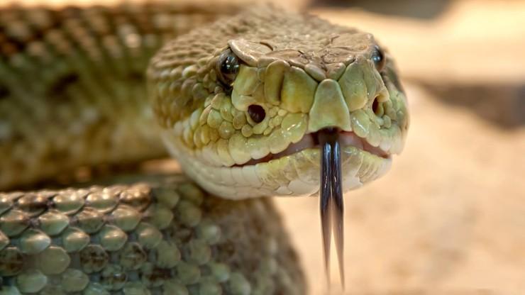 Ukąsił go wąż. Dzięki specjalnej aplikacji udało się go uratować