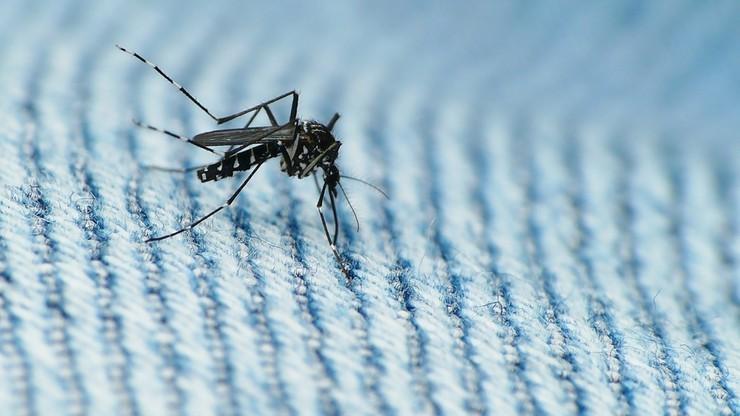 Wirus Zika w Polsce. Są pierwsze dwa potwierdzone przypadki