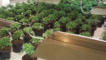 Nielegalne uprawy marihuany w halach magazynowych. Zatrzymano 18 osób, w tym 10 Wietnamczyków