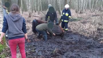 Koń topił się w bagnie. Pomogli strażacy [ZDJĘCIA]