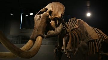 Niby-mamuty już za dwa lata