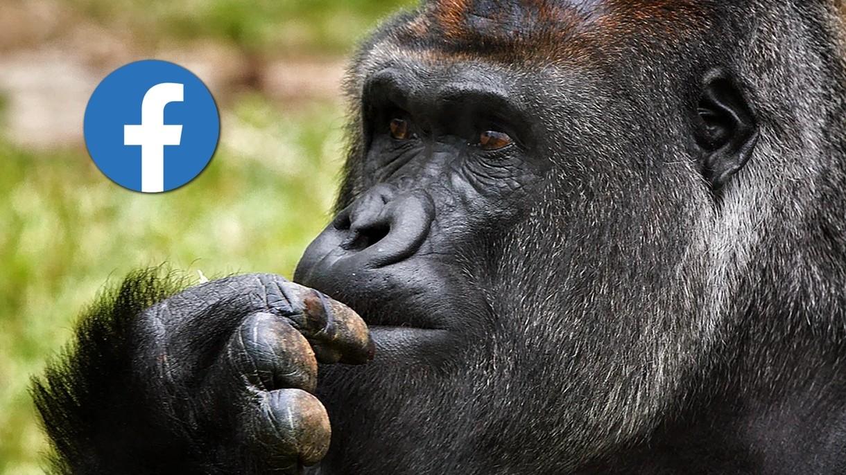 Mamy rok 2021, a algorytm Facebooka wciąż oznacza czarnoskórych jako małpy naczelne