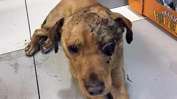 Pies zakopany żywcem. Nagroda za wskazanie sprawcy