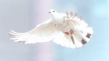 W Belgii sprzedano gołębia za ponad 1,25 mln euro