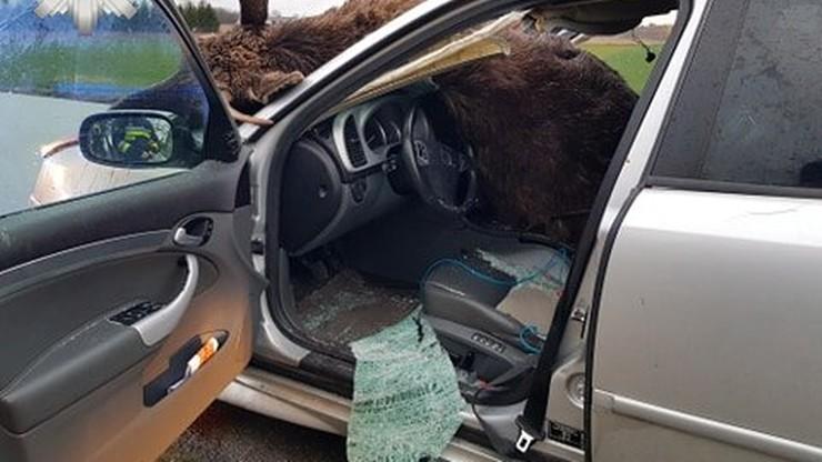 Łoś wbiegł pod rozpędzony samochód. Zwierzę niemal wpadło do wnętrza
