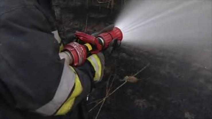 Na Podlasiu spłonęło 50 strusi