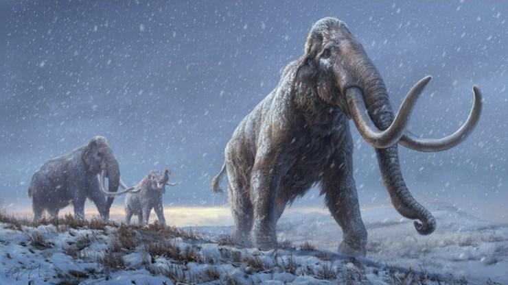 Wyodrębniono materiał DNA mamutów sprzed miliona lat