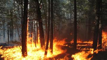 970 pożarów lasów w maju. Strażacy apelują o rozwagę