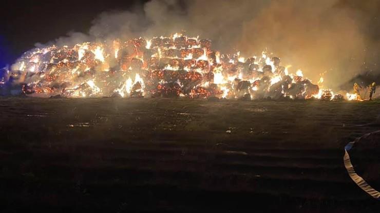 Wielkopolskie. Ogromny pożar słomy. Strażacy walczyli z żywiołem 12 godzin