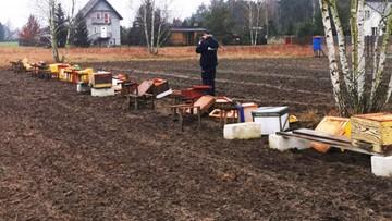 """Zniszczono 24 ule, zabito pół miliona pszczół. """"Dziękuję ci, dobry człowieku"""""""