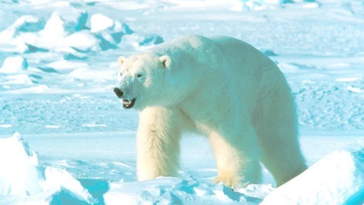Przestraszył niedźwiedzia. Został ukarany ogromną grzywną